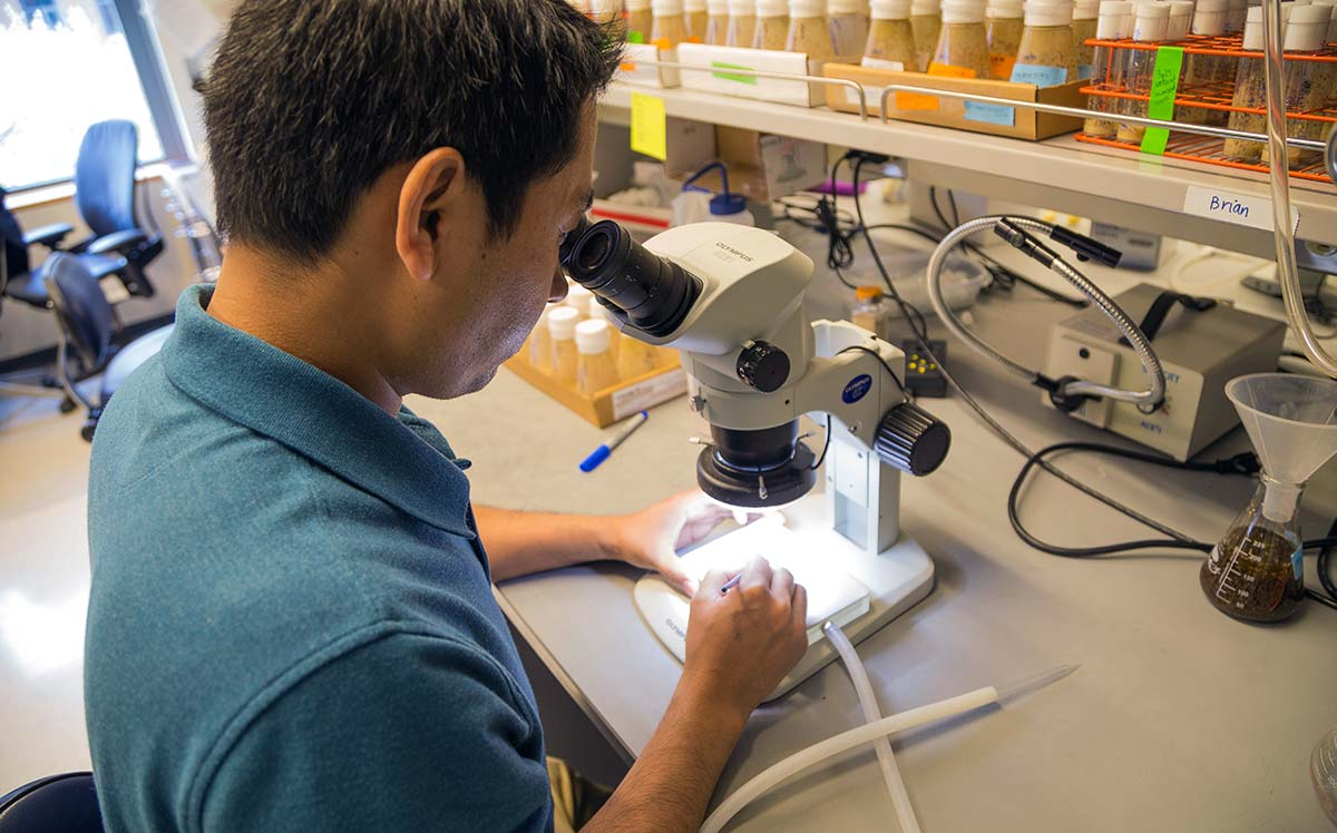 Graduate student using a microscope