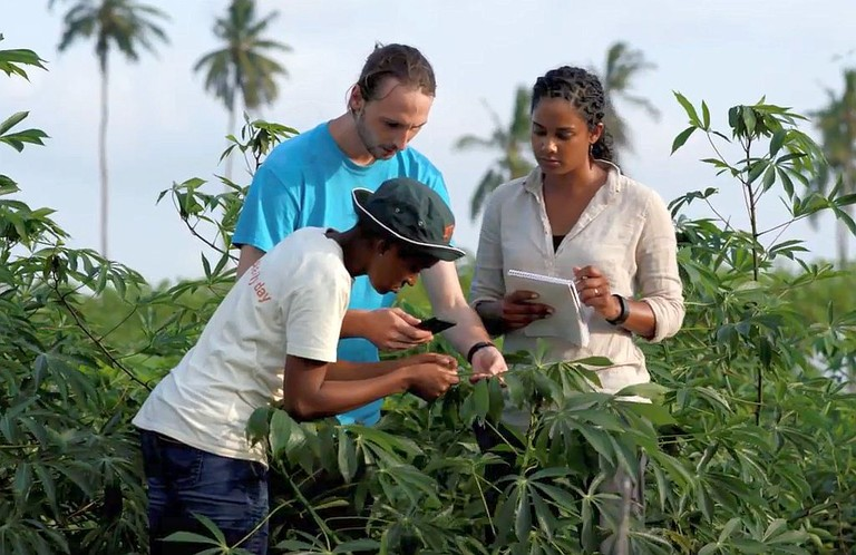 Penn State researchers and PlantVillage team members Peter McCloskey, center, and Amanda Ramcharan, right, work with a collaborator from the International Institute of Tropical Agriculture in Tanzania.