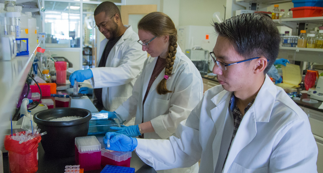 Graduate students and their adviser working in the laboratory.