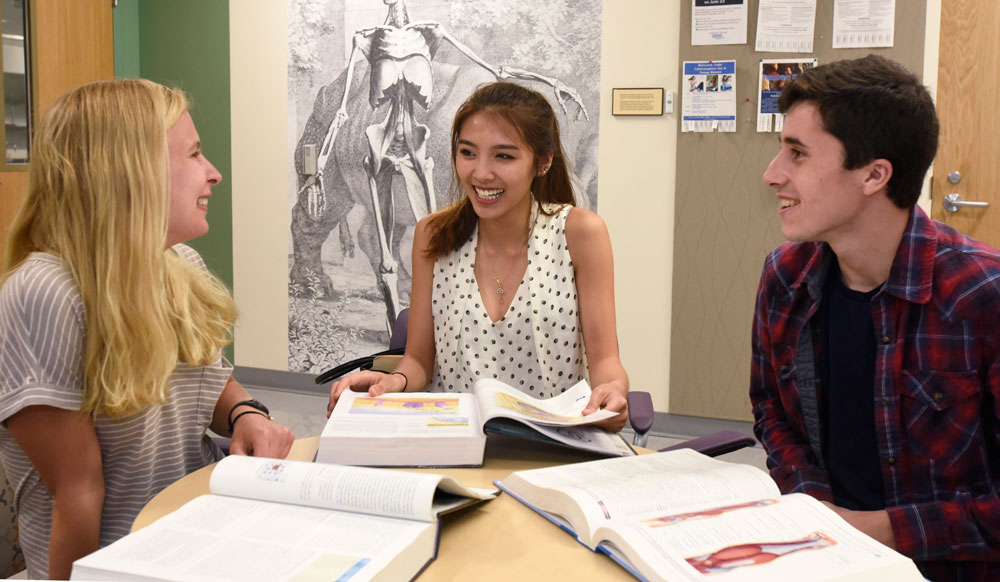Three pre-med students studying together