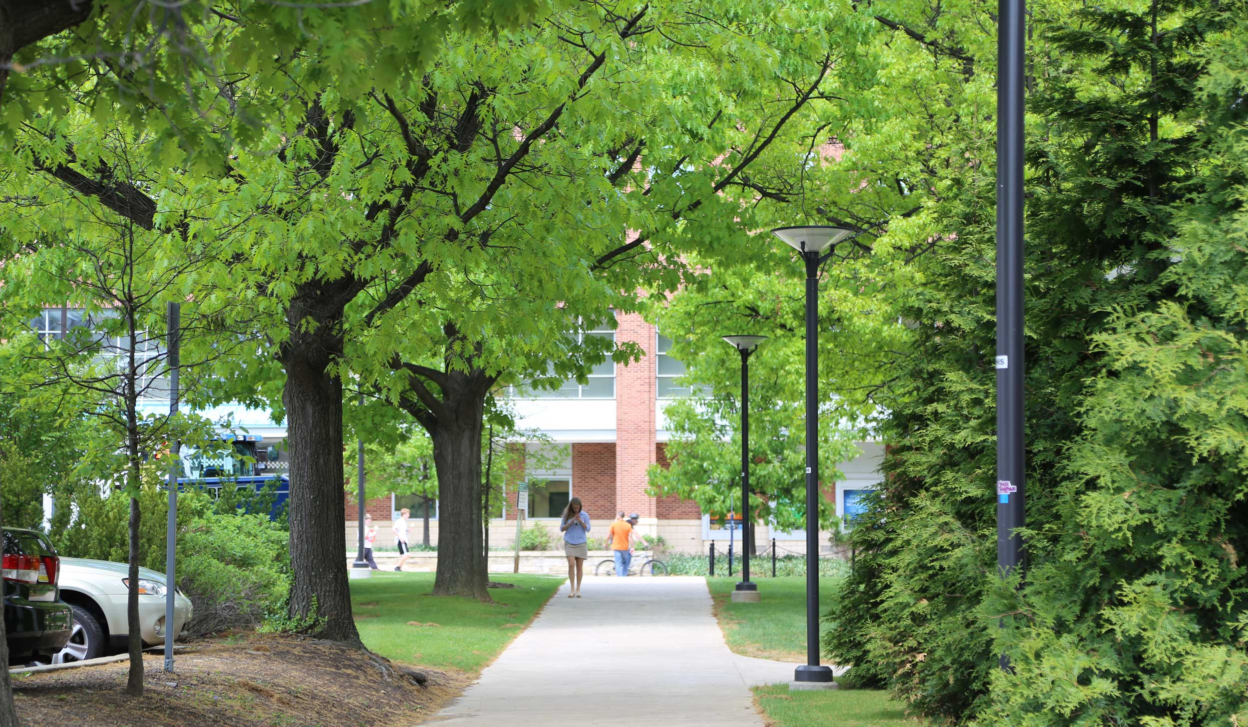 A campus walkway lined with trees in the spring