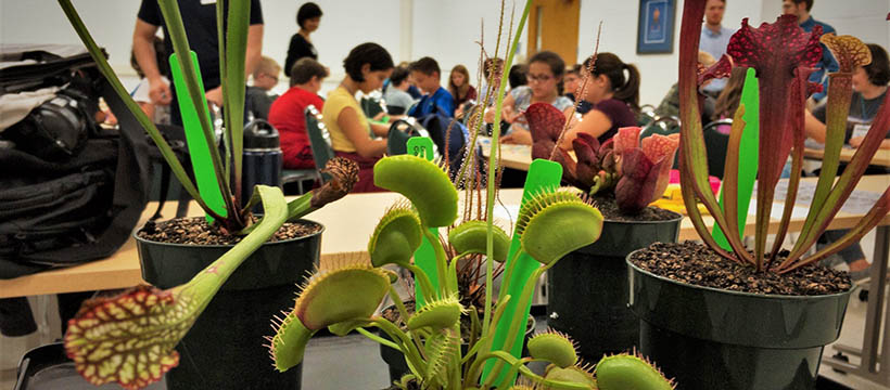 A selection of carnivorous plants used at Think Outside the Beaker