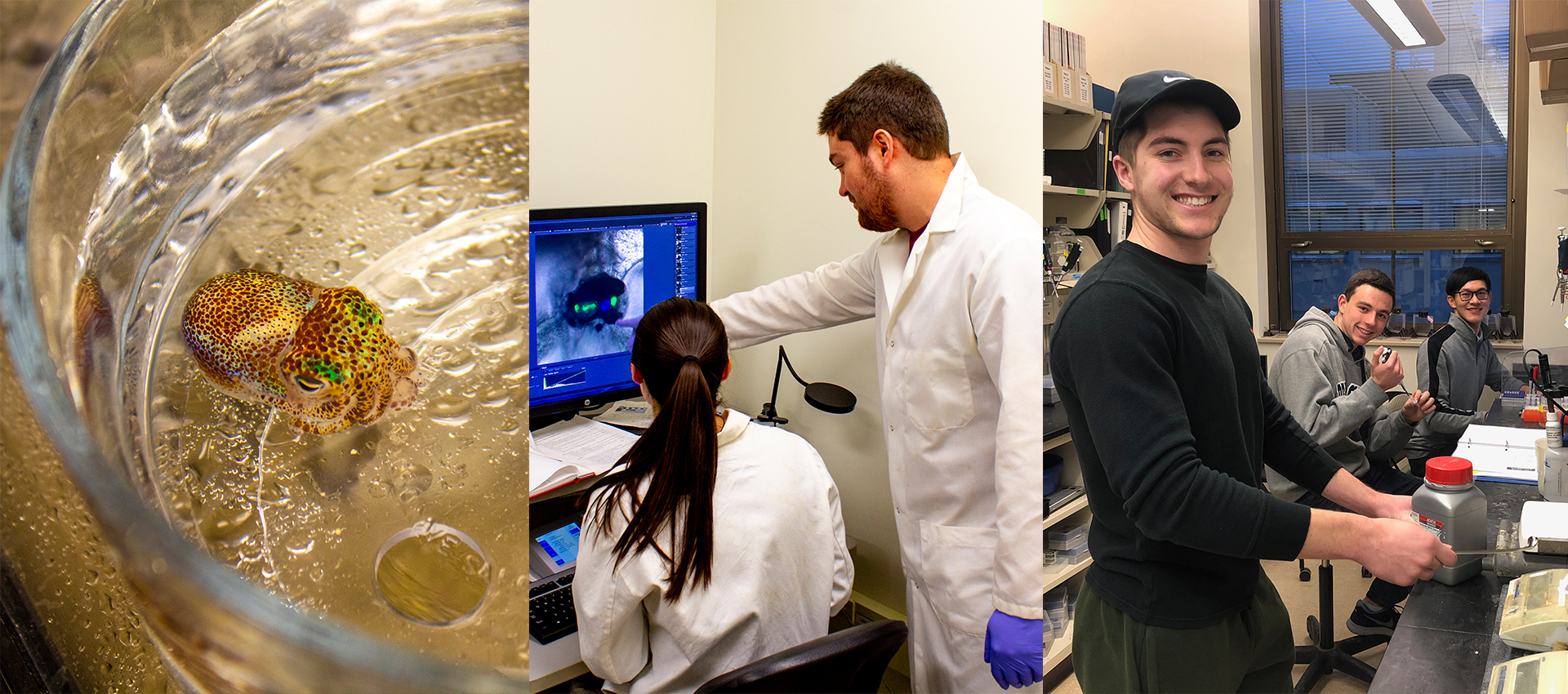 3 picture image of a squid, and student being mentored and students working in the lab