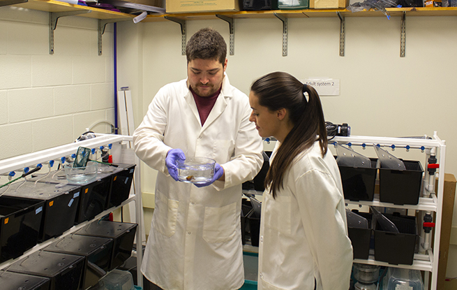 A Beckman Scholar working in the lab with her mentor