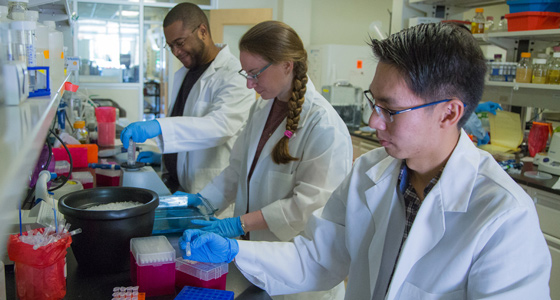 BMB graduate students working in the laboratory with their adviser.