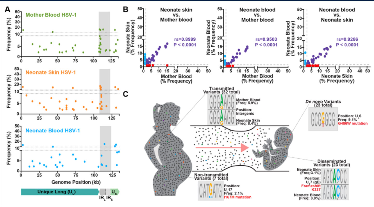 Personalized viral genomic investigation of herpes simplex virus 1 perinatal viremic transmission with dual fatality
