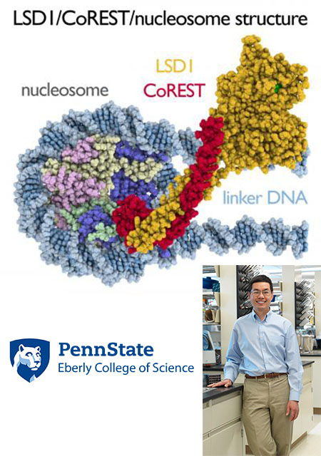 image of Song Tan along with an image of his newly discovered nucleosome struture