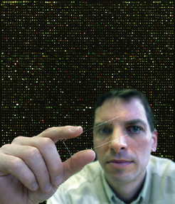 In this composite image by Greg Grieco, Frank Pugh holds a glass slide with a DNA microarray (magnified to fill the image background)