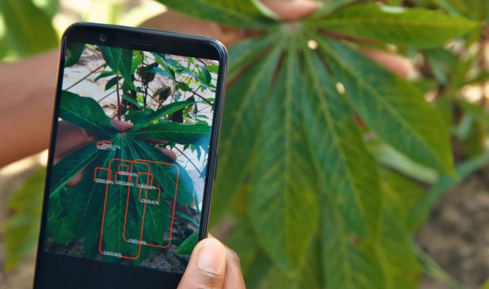plantvillage app on phone scanning plant