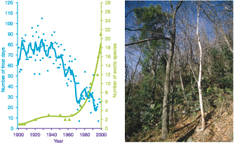 Figure 3: Vegetation shift from indigenous deciduous to exotic evergreen broad-leaved vegetation in southern Switzerland. The shrub layer is dominated by the growing number of spreading exotic evergreen broad-leaved species (see illustration) that appear to profit from milder winter conditions, indicated here by the decreasing number of days with frost per year.