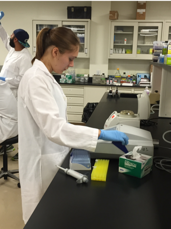Student working in the lab in the phage discovery CURE.