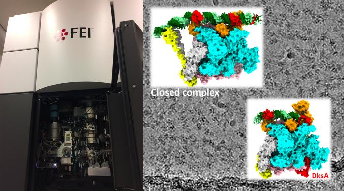 The FEI Titan Krios Cryo-electron microscope and images of RNA polymerase